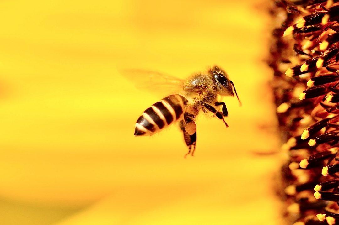 Je lutte contre la disparition des abeilles