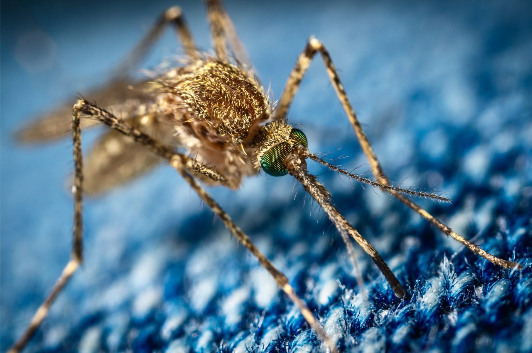 Je fabrique mon anti-moustique