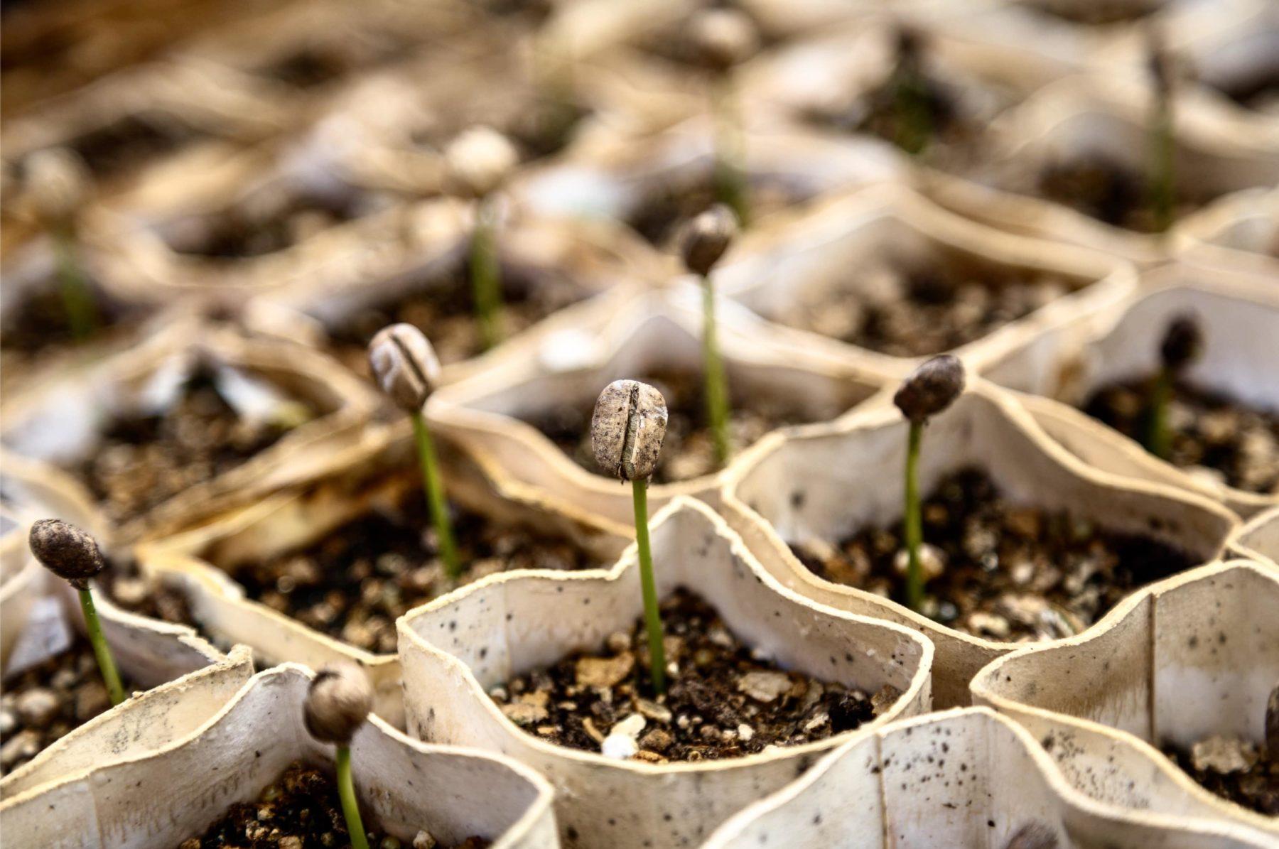 J'assiste à l'éveil de la permaculture