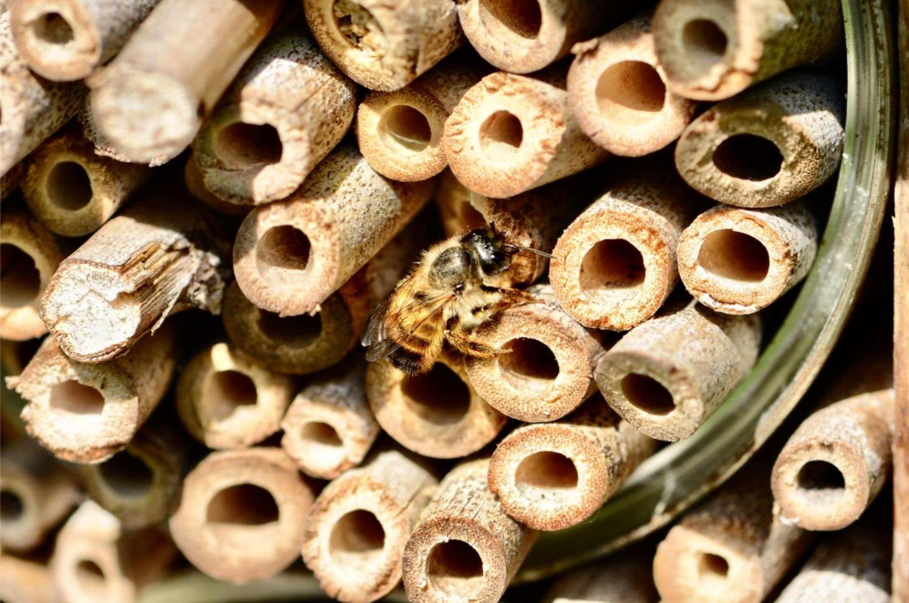 Je fabrique un nichoir à abeilles