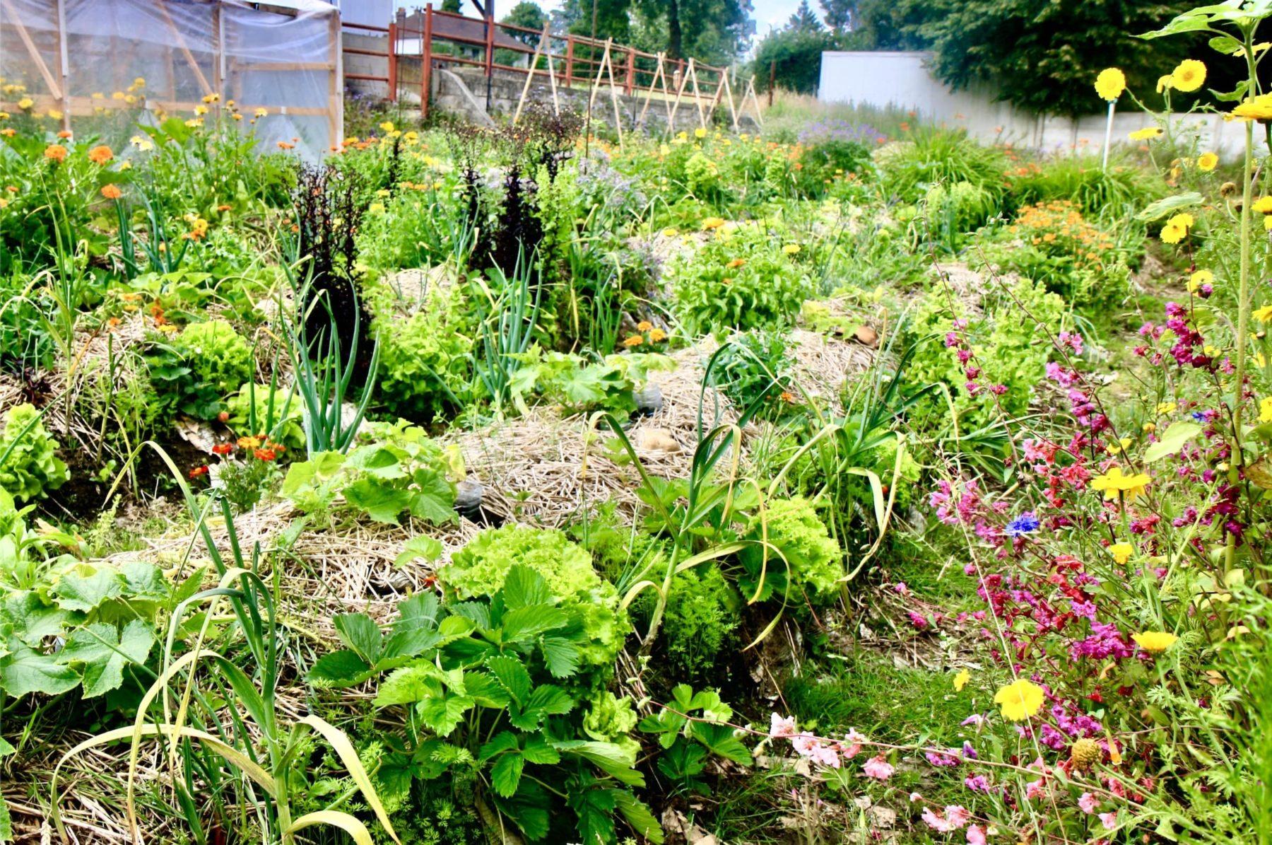 Je jardine selon les préceptes de la permaculture