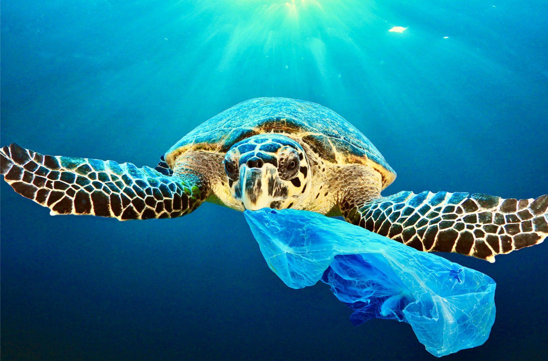 Je prends conscience de la pollution plastique dans les océans