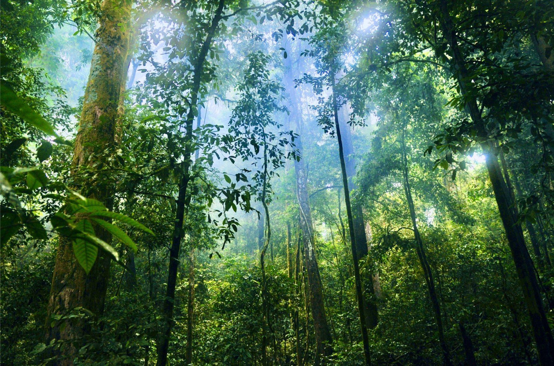 J'agis pour protéger la forêt amazonienne