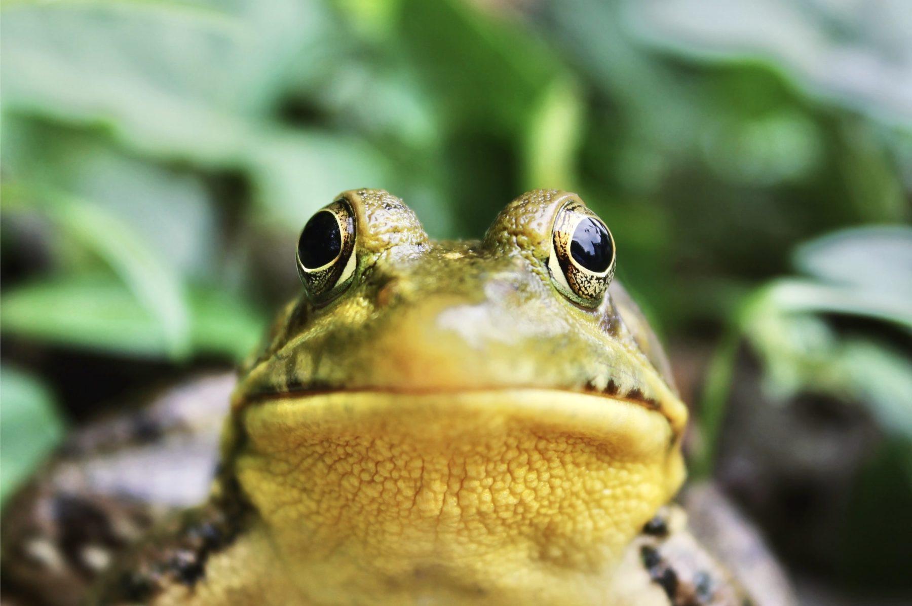 J'observe la biodiversité