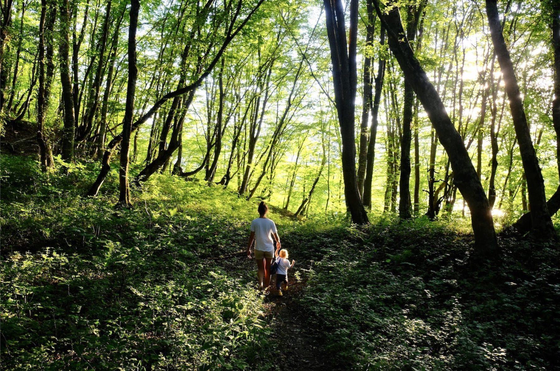 Je découvre les forêts comestibles
